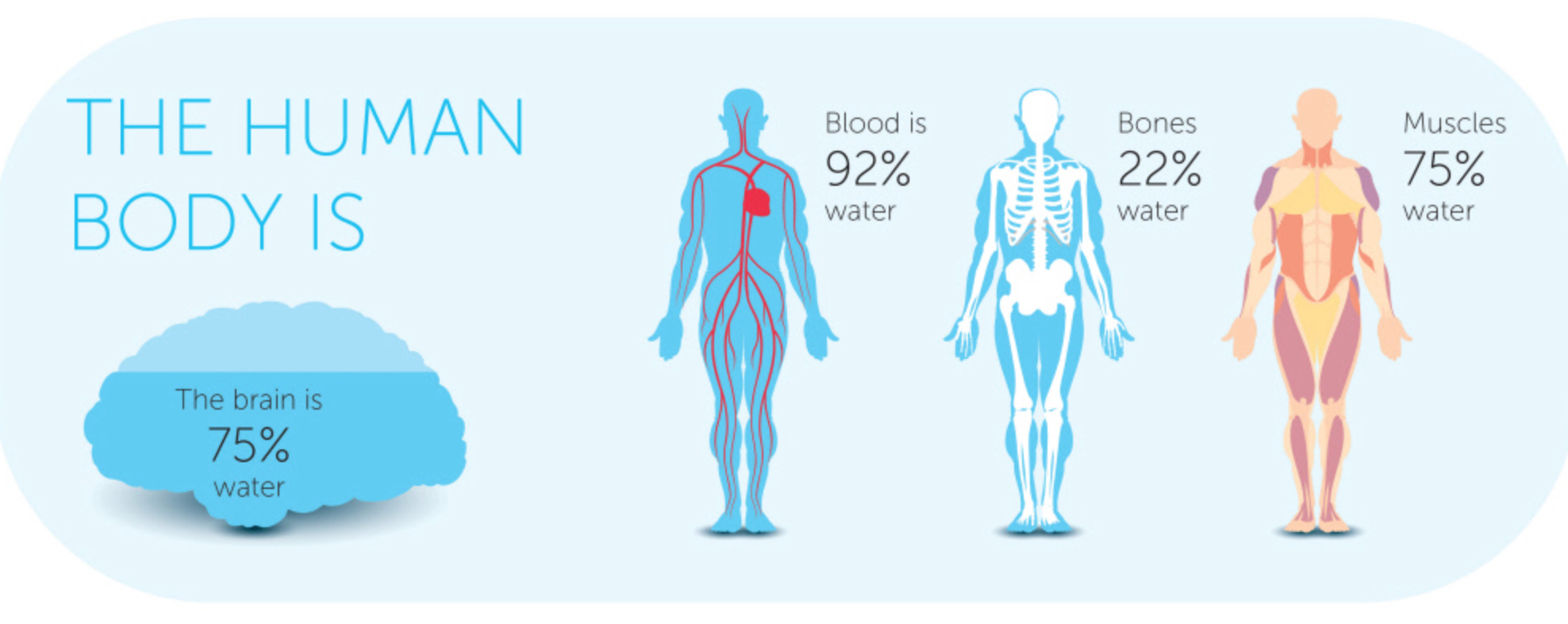 8 glasses per day is a myth: the truth about hydration - crew blog, Muscles