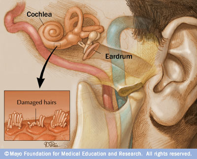 damaged hearing diagram dogs hearing diagram
